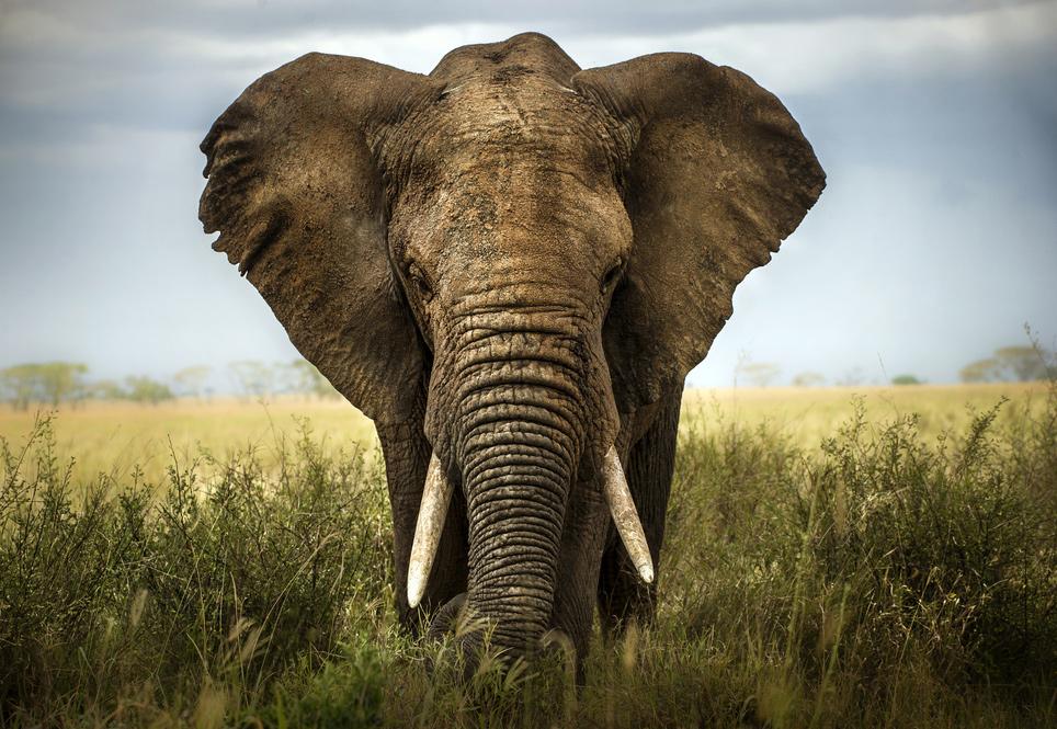 Der-Elefant-hat-sich-auf-die-Couch-gesetzt-Kommentar-Andreas-Hoose-GodmodeTrader.de-1