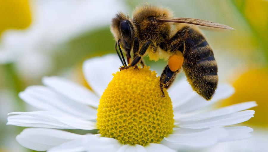 Immer-mehr-Krebstote-und-das-Bienensterben-Kommentar-Andreas-Hoose-GodmodeTrader.de-2