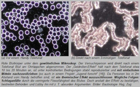 Immer-mehr-Krebstote-und-das-Bienensterben-Kommentar-Andreas-Hoose-GodmodeTrader.de-3